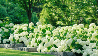 The Best Allergy-Friendly Flowers for Your Garden