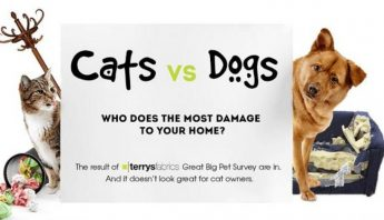 Cats Vs. Dogs: Who Does The Most Damage To Your Home? (Infographics)